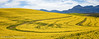 Canola Curves (Panorama Paul) Tags: paulbruinsphotography wwwpaulbruinscoza southafrica westerncape greyton overberg canolafield flowers curves clouds mountains winter nikond800 nikkorlenses nikfilters panorama