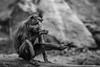 Are those my feet? (Derek O'Bryan) Tags: monkey feet hairy bw ireland