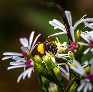 Fall Signs: Busy Bee