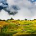 Terraced rice fields in Y Ty, LaoCai Province, VietNam