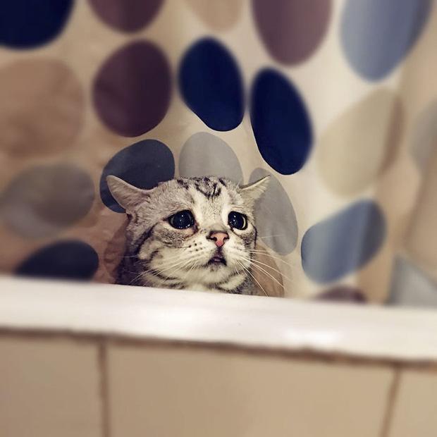 Nhìn bộ mặt buồn thiu như mất sổ gạo của boss mèo đáng yêu, con sen nào cũng muốn ôm lấy một cái - Ảnh 7.