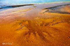 Reaching Out_27A0552 (Alfred J. Lockwood Photography) Tags: alfredjlockwood nature landscape abstract color shapes patterns texture grandprismatic yellowstonenationalpark morning summer wyoming geothermalpool microbialmat