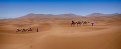 Camel Caravan in the Sahara Desert (maios) Tags: camelcaravaninthesaharadesert camel caravan sahara desert merzouga morocco sanddunes tuaregs beduin blue africa maroc crossing