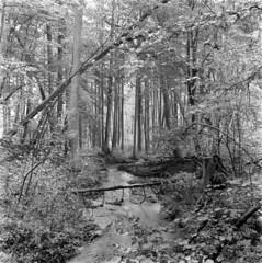 swampy wood (Other dreams) Tags: łyna spring source stream river poland forest grove swamp masuria warmia nature reserve conservancy tributary strumień rezerwat źródła niche wood preserve lasynapiwodzkie łyńskimłyn orłowo rkobendza