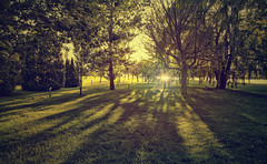 One More Farewell (akigabo) Tags: montreal summer outside parc sunset dusk trees 7dwf landscape sunlight light canon t5i 700d 16mm life shadows green bright nature sunshine akigabo