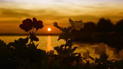 Sonnenuntergang am Bodensee_2