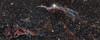 NGC6960 - Fátyol köd - Veil nebula (hodorgabor) Tags: astrophoto astrophotography sky deepsky longexposure nebula night veil