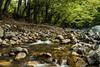 IMG_0679 (petrosli) Tags: nature greece canon eos500d river kalikomi thessaly trees