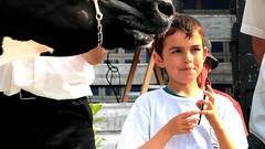 Comice Agricole Saint Renan  2 Septembre 2017 (Les éleveurs du bout du monde) Tags: prim'holstein holstein vache cow éleveur eleveur breeder dairy farmer cattle bétail génisse heifer farm ferme agriculture agriculteur comice exibition show farming dairying herd agricultural saint renan plouguin ploudalmèzeau ploudalmezeau plourin brest porspoder lannilis milizac guipronvel lanrivoare treouergat breles finistere bretagne brittany lait laitière
