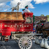 Bud - An American Icon (Elaine Schwetz Photography) Tags: budweiser mtjoy crowds event horses summer town wagon