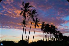 Tropic Night (bffpicturesworld) Tags: beautiful sunset tropic night palmer shading landscape peace quiet bestplace fullcolor tree top wow reunionisland iledelareunion