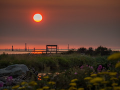 Smokey Sunset (iPhilFlash) Tags: wildflower vancouver fraserriver sky sunset flora britishcolumbia garrypointpark outdoors steveston canada nature outdoor richmond red ca
