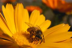Macro (Diego Martin™) Tags: macro flora nature canon chile
