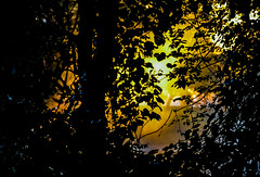 Here it comes! (tomk630) Tags: virginia nature sunlight trees leaves darkness light wild colors woods