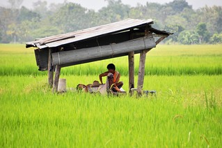 chiang mai - thailande 3