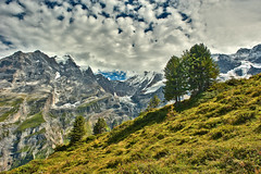 The Jungfrau mountain and the Rottal Glacier  , taken from the Busenalp. Canton of Bern, Switzerland.23.08.17, 14:07:37. .No. 7249. (Izakigur) Tags: alps alpes alpen alpi berneroberland bern berne berna jungfrau glacier climbeverymountain thelittleprince thejungfrauregion rottal swiss suiza suisia suizo suïssa summer myswitzerland musictomyeyes tree trees hiking helvetia svizzera switzerlnad lasuisse laventuresuisse liberty d700 dieschweiz