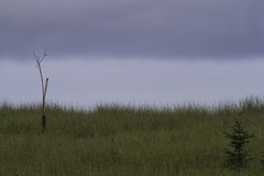 peaceful morning (K Jurgens) Tags: longbeach sliderssunday
