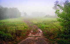 Milky Way (kud4ipad) Tags: 2016 prokhorovka fog tree summer smcpentaxda1645mmf40 road plant
