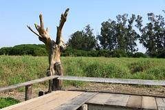 Dead Tree (superzookeeper) Tags: 5dmk4 5dmkiv hk hongkong canoneos5dmarkiv ef2470mmf28liiusm tree grass namsangwai eos yuenlong digital village landscape