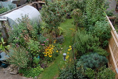 Looking Down on the Back Garden - August 2017 (basswulf) Tags: backgarden polytunnel d40 1855mmf3556g lenstagged unmodified 32 image:ratio=32 permissions:licence=c 20170829 201708 3008x2000 lookingdownonthegarden normcres oxford england uk garden