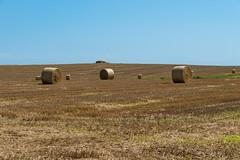 Straw - Barmston (GIgaYork) Tags: 18300fx 18300mm d810 fx fxlens fullframe nikkor nikkor18300 nikon nikon18300mm nikond810 barmston eastyorkshire humberside yorkshire field fields hay corn haybales haybale