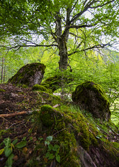 DSC_7001 (kbl phtogaphy) Tags: naturaleza paisaje nikon nikon5100 samyang samyang10mm árboles bosque montañas pirineos