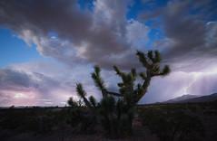 Twilight Monsoon (Maddog Murph) Tags: lightning thunder storm clouds monsoon southwest utah nevada joshua tree desert sand scrub brush hill chain bolt thundercloud cumulus twilight stars astro night glow flash