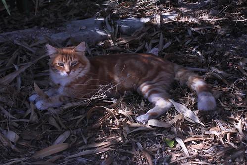 Catacombs Cat