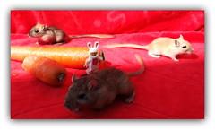 The war of carrots (peter-ray) Tags: lego minifigure bunny carrot moc peter ray animal samsung nx2000 2017 kawai