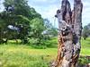 tronco2 (yajat54) Tags: nogales sonora picnic terrenos cabañas cabins nature naturaleza