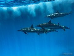 Dolphin House Reef (Silver_63) Tags: egitto egypt marsa alam dolphin house delfini underwater
