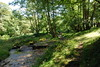 2017-08-28 cannock chase 047 (sonya.britton) Tags: cannockchase staffordshire ancientforest wood forest walk family tree stream