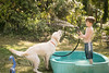 frodo-service-dog-in-training-16 (Little Earthling Photography) Tags: dog labradoodle water servicedog boy summer