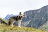 Bruc (HP030843) (Hetwie) Tags: mountain meer austria oostenrijk bruc pasterze hochalpenstasse bergen lake franzjosefhã¶he franzjosefhöhe