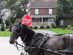 Horse before the cart (thomasgorman1) Tags: horse buggy stop sign equestrian house trees street road rural outdoors canon blinders streetphotos pennsylvania usa amish corner