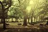 Dinnertime (Carrie McGann) Tags: wildturkeys trees flare green brown ranchocordova 090617 nikon interesting