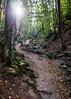 Dera Szurdok (VeresIbi) Tags: magyarország mzuiko hungary ungarn outdoor summer erdő epl5 olympusepl5 olympus olympusm1442mmf3556iir okt pilis pilisszentkereszt forest természet túra light okt15 nature