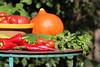 CKuchem-5656 (christine_kuchem) Tags: basilikum bauerngarten biogarten bioqualität ernte erntezeit fleischtomate garten gemüse gemüsegarten grün gurke hokaido kräuter kürbis nutzgarten paprika peperoni pflanze rarität sommer sorte sorten sortenvielfalt tomate vielfalt zucchini bio biologisch frisch gelb gesund lecker natürlich orange reif rot selten unbehandelt