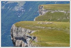 High plain herd (hjhoeber2) Tags: herd highplain france drôme zeiss sheep sonnar sonnart18135 za sony ilce sonyalpha 200mm 135mm sheepherd herde kudde