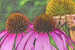 Echinacea - zonnehoed (Stil Licht) Tags: flowers art topaz topazstudio