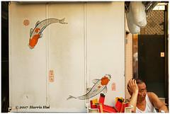 Happy Fishes 魚樂無窮 - Hong Kong XT4882e (Harris Hui (in search of light)) Tags: harrishui fujixt1 digitalmirrorlesscamera fuji fujifilm vancouver richmond bc canada vancouverdslrshooter mirrorless fujixambassador xt1 fujixcamera fujixseries fujix fuji35mmf2 fujiprimelens fixedlens street streetphotography taiyuenstreet wanchai happyfishes