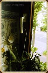 P1010455_Fotor (Bernsteindrache7) Tags: summer flora fauna house home nature indoor panasonic lumix