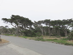 20160817 Californie Pacific Grove - (135) (anhndee) Tags: usa californie california pacificgrove