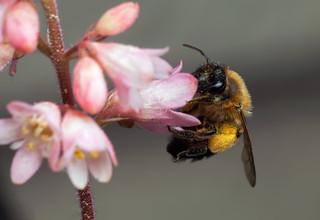 Tiny Flowers for Tiny Bee - _TNY_9287