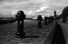 FILM - Beside the Trent (fishyfish_arcade) Tags: analogphotography bw blackwhite blackandwhite filmphotography filmisnotdead istillshootfilm monochrome olympusom1 rolleisuperpan200 zuiko50mmf18 analogcamera film mono gainsborough rivertrent lincolnshire