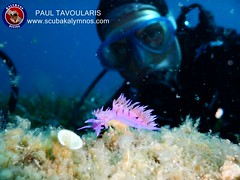 """Kalymnos Diving • <a style=""""font-size:0.8em;"""" href=""""http://www.flickr.com/photos/150652762@N02/35629984584/"""" target=""""_blank"""">View on Flickr</a>"""