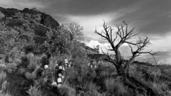 Sedona in Monochrome (Ken Krach Photography) Tags: sedonaarizona