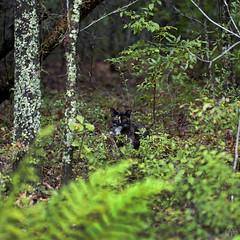 Cat in the Woods (Geraldo Tarallo Assis) Tags: cat woods macro canon 100 cloudy day trip car forest savannah ga georgia