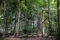 2017-08-24 Hulshorst - Veluwemeerkust Hulshorst-3 (stunningtravelnl) Tags: veluwe veluwemeerkust hulshorst hierden wandelen wandeling wandelroute nunspeet