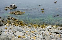 DSCF1101 (jbre) Tags: bigsur highway1 landscape usa acqua mare natura nature paesaggio sabbia sand sea vegetazione water